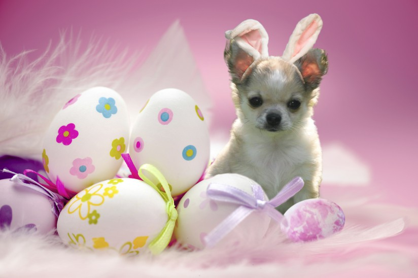 Happy-Easter-Wallpaper-20131